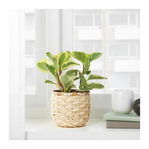 KAFFEBÖNA - 花盆, 竹   IKEA 香港及澳門 - PE724803_S4