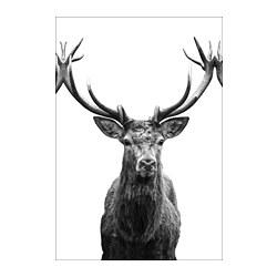 BJÖRKSTA - picture, Horns | IKEA Hong Kong and Macau - PE724808_S3