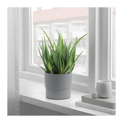 NYPON - plant pot, in/outdoor grey | IKEA Hong Kong and Macau - PE727654_S4