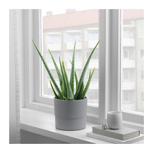 NYPON - plant pot, in/outdoor grey | IKEA Hong Kong and Macau - PE727657_S4