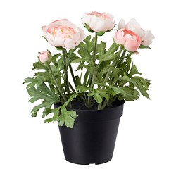 FEJKA - artificial potted plant, in/outdoor/Ranunculus pink | IKEA Hong Kong and Macau - PE686837_S3