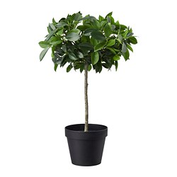 FEJKA - artificial potted plant, in/outdoor/Weeping fig stem | IKEA Hong Kong and Macau - PE686802_S3