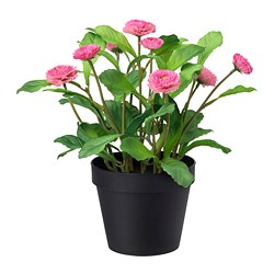 FEJKA - artificial potted plant, in/outdoor/Common daisy pink | IKEA Hong Kong and Macau - PE686807_S3