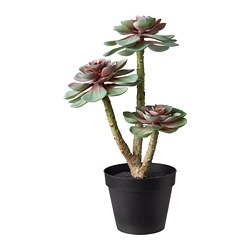 FEJKA - artificial potted plant, in/outdoor Succulent | IKEA Hong Kong and Macau - PE686816_S3