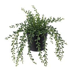 FEJKA - artificial potted plant, in/outdoor String of beads | IKEA Hong Kong and Macau - PE686818_S3