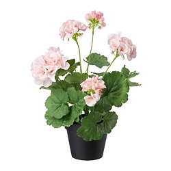 FEJKA - artificial potted plant, in/outdoor/Geranium pink | IKEA Hong Kong and Macau - PE686831_S3