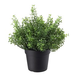 FEJKA - artificial potted plant, in/outdoor Baby's tears | IKEA Hong Kong and Macau - PE686800_S3