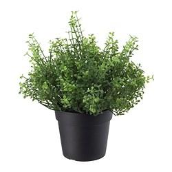 FEJKA - 人造盆栽, 室內/戶外用 玲瓏冷水花 | IKEA 香港及澳門 - PE686800_S3