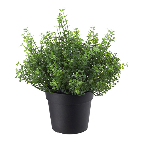 FEJKA - artificial potted plant, in/outdoor Baby's tears | IKEA Hong Kong and Macau - PE686800_S4