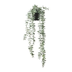 FEJKA - artificial potted plant, in/outdoor hanging/eucalyptus | IKEA Hong Kong and Macau - PE774216_S3