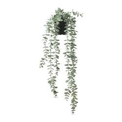 FEJKA - 人造盆栽, 室內/戶外用 懸掛/桉木 | IKEA 香港及澳門 - PE774216_S3