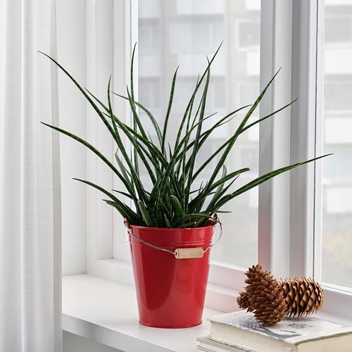 SOCKER bucket/plant pot