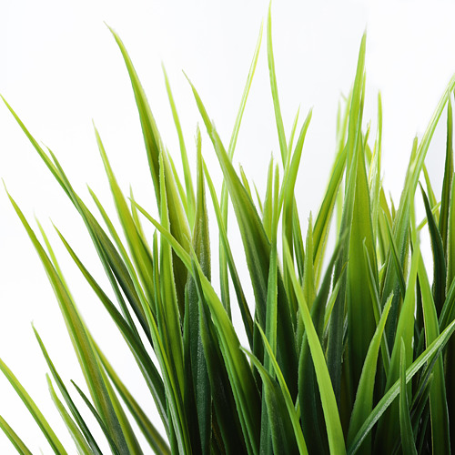 FEJKA - artificial potted plant, in/outdoor grass | IKEA Hong Kong and Macau - PE732955_S4