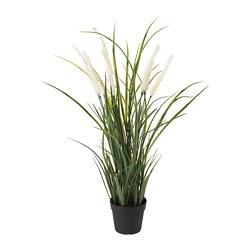FEJKA - 人造盆栽, 室內/戶外用 裝飾/草 | IKEA 香港及澳門 - PE732958_S3