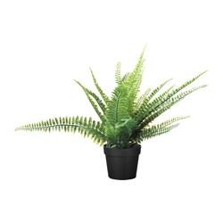 FEJKA - 人造盆栽, 室內/戶外用 蕨 | IKEA 香港及澳門 - PE643398_S3