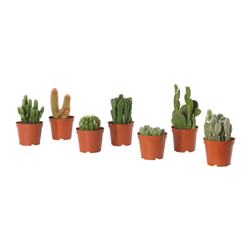 CACTACEAE - potted plant, cactus/assorted | IKEA Hong Kong and Macau - PE643497_S4