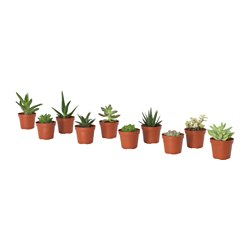 SUCCULENT - 盆栽植物, 多款 | IKEA 香港及澳門 - PE643699_S3