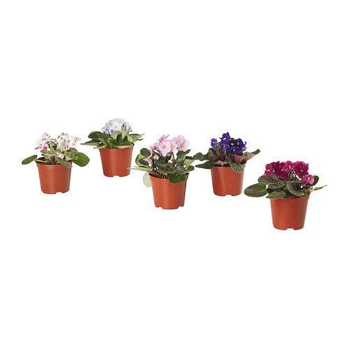 SAINTPAULIA - potted plant, African violet assorted colours | IKEA Hong Kong and Macau - PE834499_S4