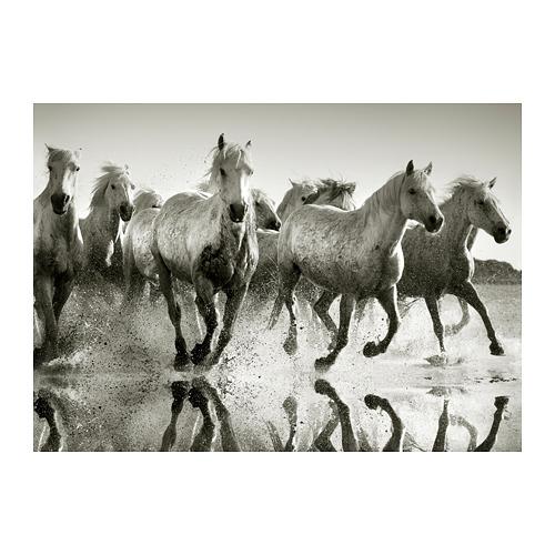 PJÄTTERYD - picture, Wild horses   IKEA Hong Kong and Macau - PE791451_S4