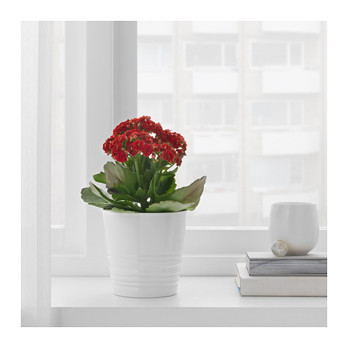 MUSKOT - plant pot, white | IKEA Hong Kong and Macau - PE697482_S4