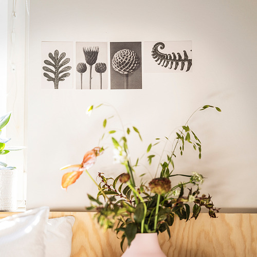 YLLEVAD - 藝術卡, 植物細節   IKEA 香港及澳門 - PE838703_S4