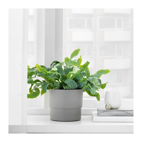 NYPON - plant pot, in/outdoor grey | IKEA Hong Kong and Macau - PE700336_S4