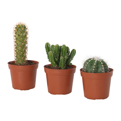 CACTACEAE - potted plant, cactus/assorted | IKEA Hong Kong and Macau - PE656709_S4