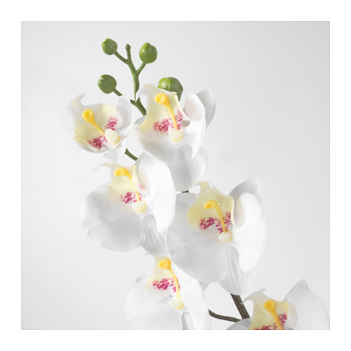 SMYCKA - artificial flower, Orchid/white | IKEA Hong Kong and Macau - PE596752_S4