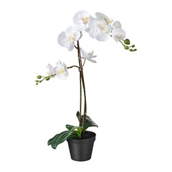 FEJKA - artificial potted plant, Orchid white | IKEA Hong Kong and Macau - PE745269_S3
