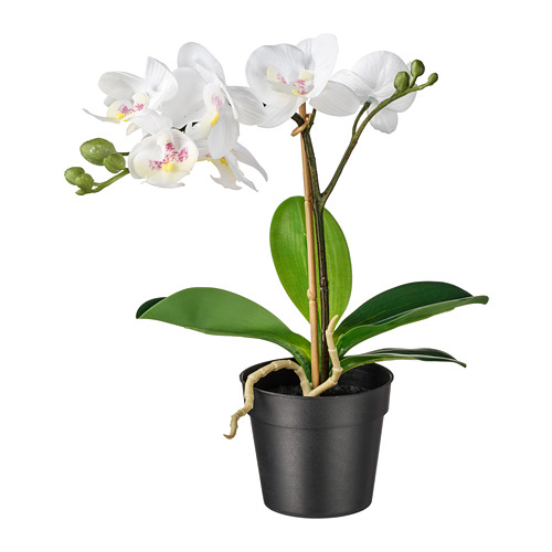 FEJKA - artificial potted plant, Orchid white | IKEA Hong Kong and Macau - PE745276_S4