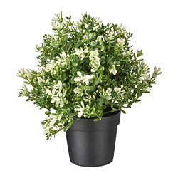 FEJKA - artificial potted plant, thyme | IKEA Hong Kong and Macau - PE745319_S3