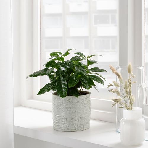 CHIAFRÖN - 花盆, 室內/戶外用 白色 | IKEA 香港及澳門 - PE804352_S4
