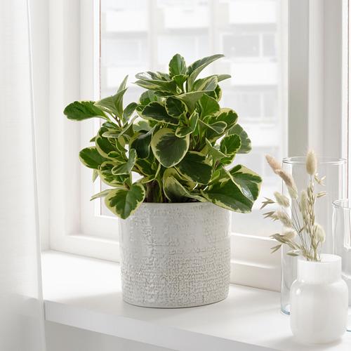 CHIAFRÖN - 花盆, 室內/戶外用 白色   IKEA 香港及澳門 - PE804355_S4