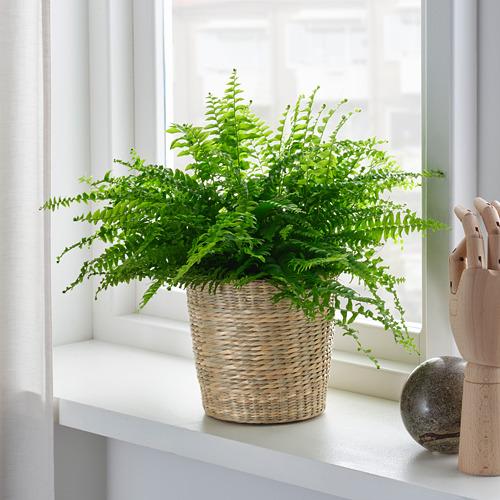 DJUNGELGURKA plant pot