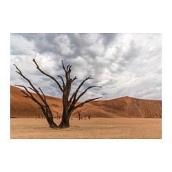 PJÄTTERYD - picture, tree in desert   IKEA Hong Kong and Macau - PE803220_S3
