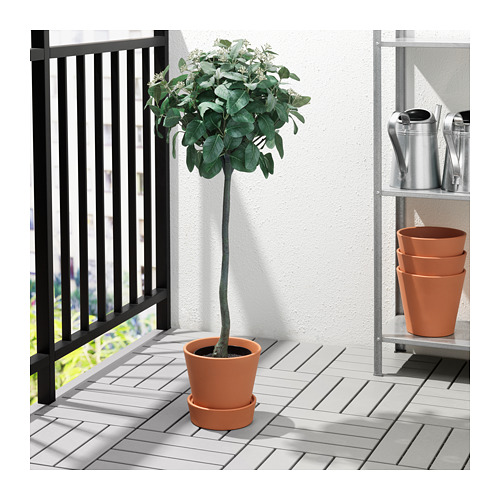 INGEFÄRA - plant pot with saucer, outdoor/terracotta | IKEA Hong Kong and Macau - PE708499_S4