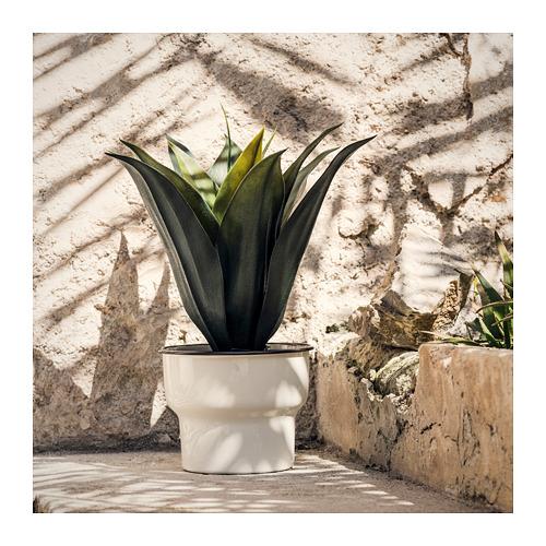 CITRONSYRA 花盆