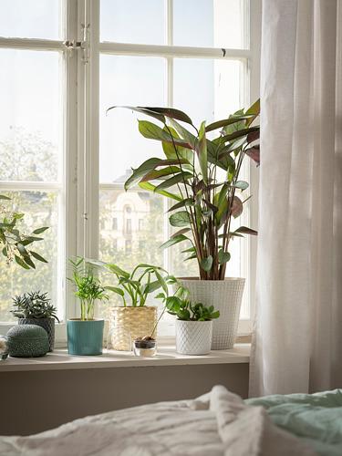 CHIAFRÖN - 花盆, 白色   IKEA 香港及澳門 - PE748266_S4