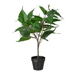 FEJKA - 人造盆栽, 室內/戶外用 無花果   IKEA 香港及澳門 - PE804167_S3