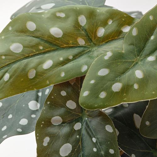 FEJKA - 人造盆栽, in/outdoor foliage Begonia   IKEA 香港及澳門 - PE804172_S4