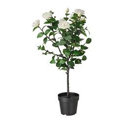 FEJKA - 人造盆栽, 室內/戶外用/山茶花 白色 | IKEA 香港及澳門 - PE804173_S3