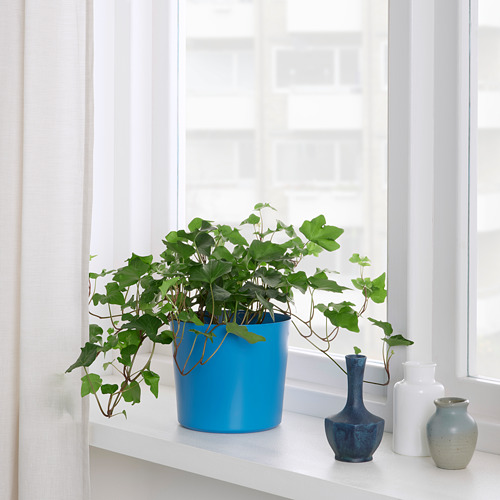 OMFÅNG - plant pot, in/outdoor blue | IKEA Hong Kong and Macau - PE809484_S4