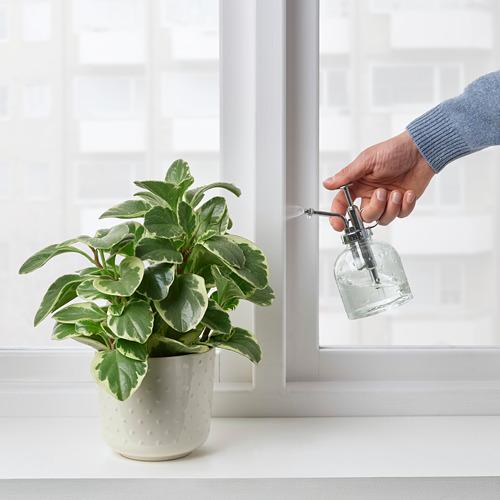 SESAMFRÖN - 植物噴水壺, 透明玻璃 | IKEA 香港及澳門 - PE809496_S4