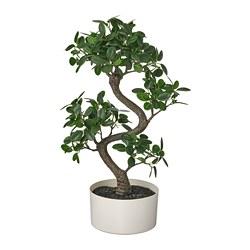 FEJKA - 人造盆栽連花盆, 室內/戶外用 盆景 | IKEA 香港及澳門 - PE809427_S3