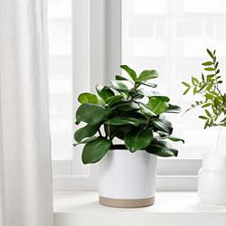 FEJKA - 人造盆栽, 室內/戶外用 書帶木 | IKEA 香港及澳門 - PE809437_S3
