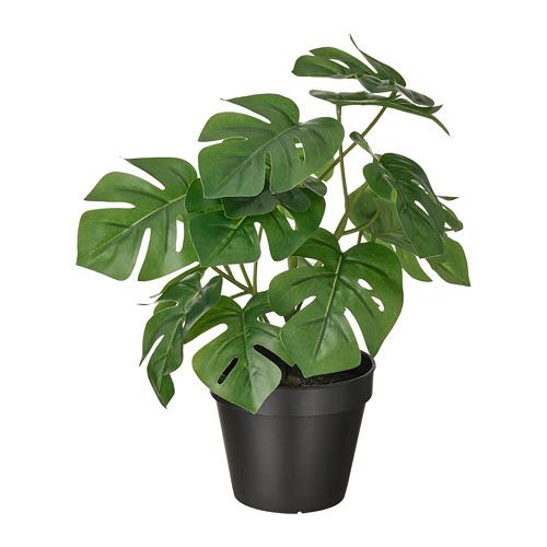 FEJKA - 人造盆栽, 室內/戶外用 龜背竹 | IKEA 香港及澳門 - PE809439_S4