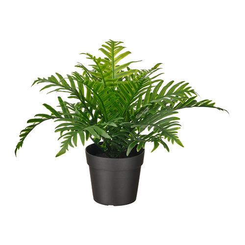 FEJKA - 人造盆栽, 室內/戶外用 水龍骨   IKEA 香港及澳門 - PE809449_S4