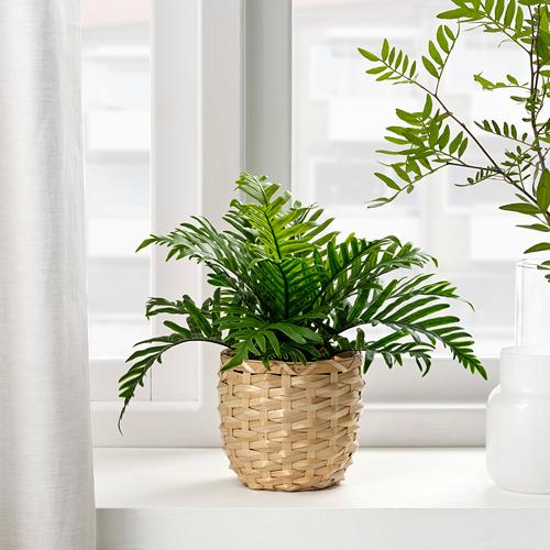 FEJKA - 人造盆栽, 室內/戶外用 水龍骨   IKEA 香港及澳門 - PE809450_S4