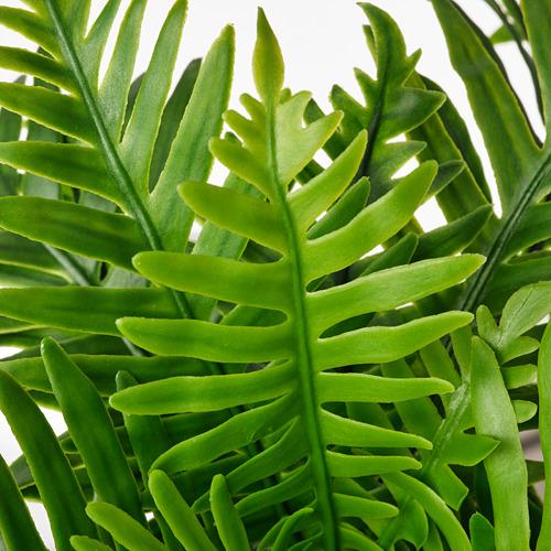 FEJKA - 人造盆栽, 室內/戶外用 水龍骨   IKEA 香港及澳門 - PE809451_S4