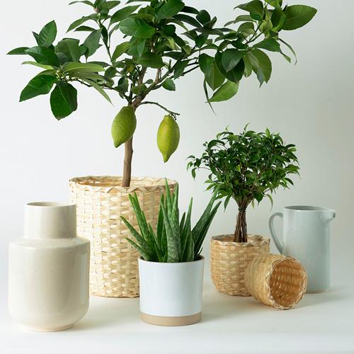 KAFFEBÖNA - 花盆, 竹   IKEA 香港及澳門 - PE750489_S4